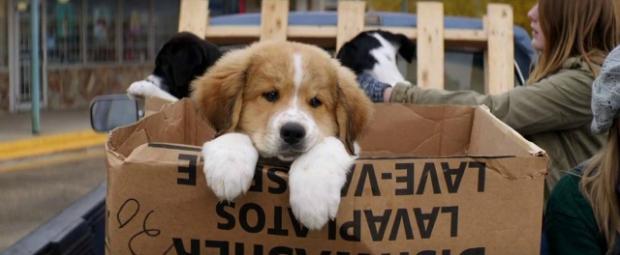 a-dogs-purpose-puppy-josh-gad