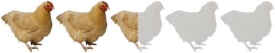 the-ballad-buster-scruggs-chicken-liam-neeson