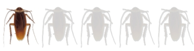 wounds-2019-netflix-movie-cockroaches