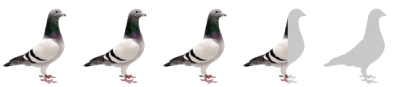 dr-bird-advice-sad-poet-pigeon-review